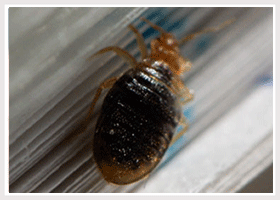 Bed Bug Heat Eradication