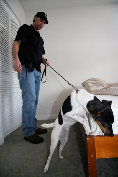 Canine inspection